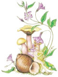 Mushrooms & Winkles, Copyright© 2004 Fairies World