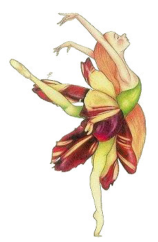 Petal Tulip, Copyright© 2001 Fairies World