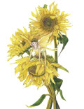 Sunflower Fairy, Copyright©  2004 Fairies World